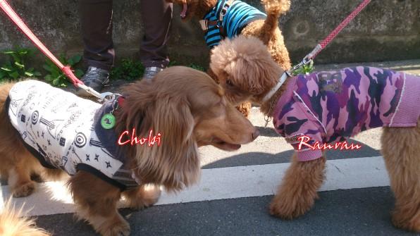 chobi1.jpg