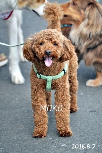 muku001.jpg