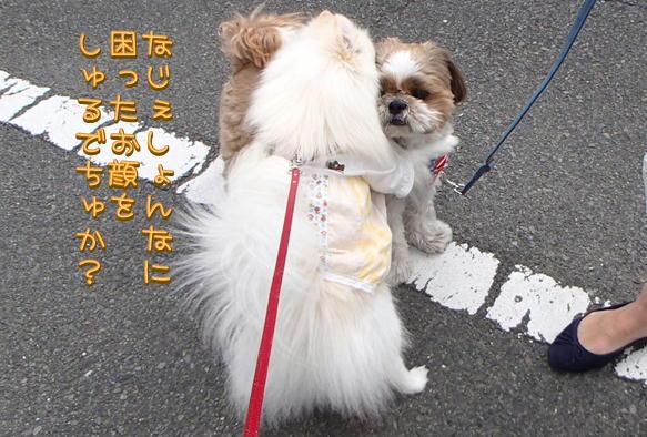 1_03_201605012111574fb.jpg