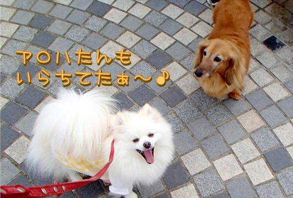 1_05_2016050121120011e.jpg