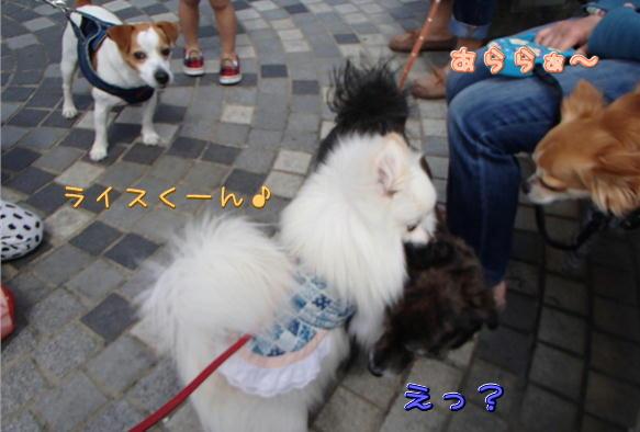 1_09_201604261936050df.jpg