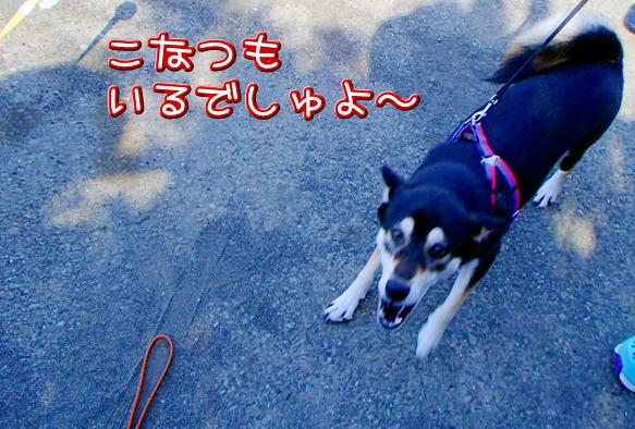 1_10_20160901194220ed8.jpg
