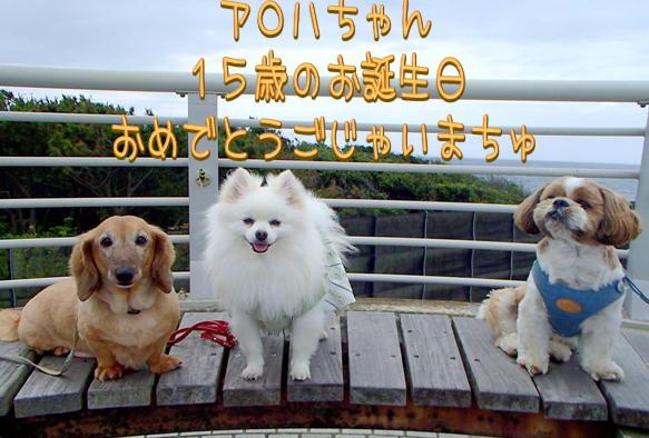 1_14_20160619154057cb0.jpg