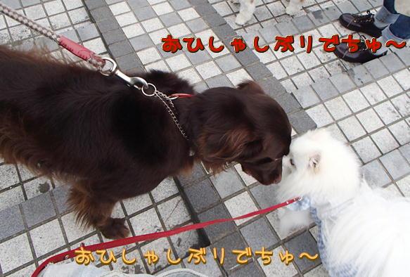 1_19_20160922203309fb2.jpg