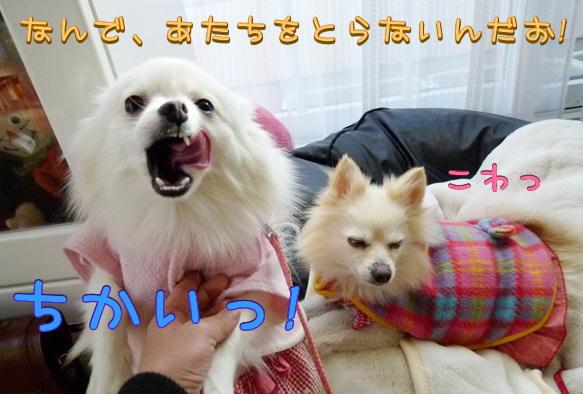 1_21_2016091520393425d.jpg