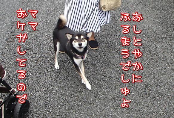 1_21_20160922203400055.jpg