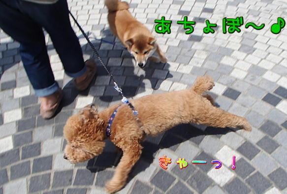 1_22_201604261937414c0.jpg