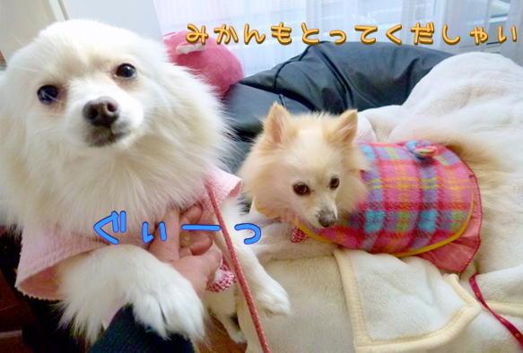 1_22_201609152039355e5.jpg