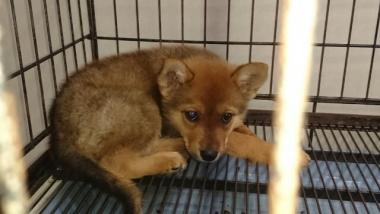 2016-6-23預かり犬