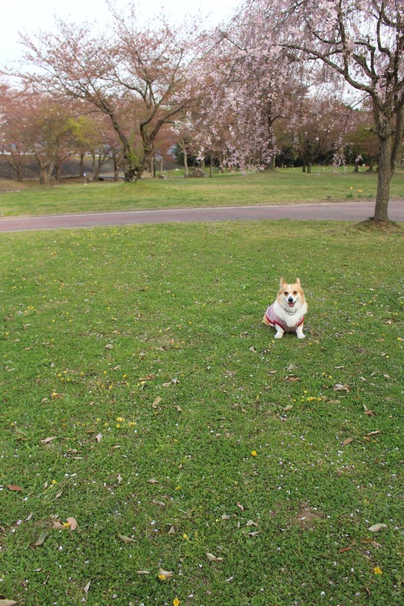 いつもの公園7