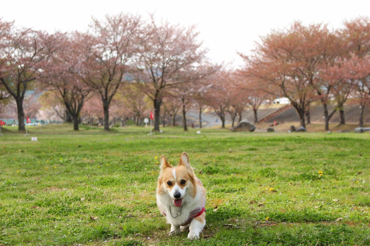 いつもの公園5