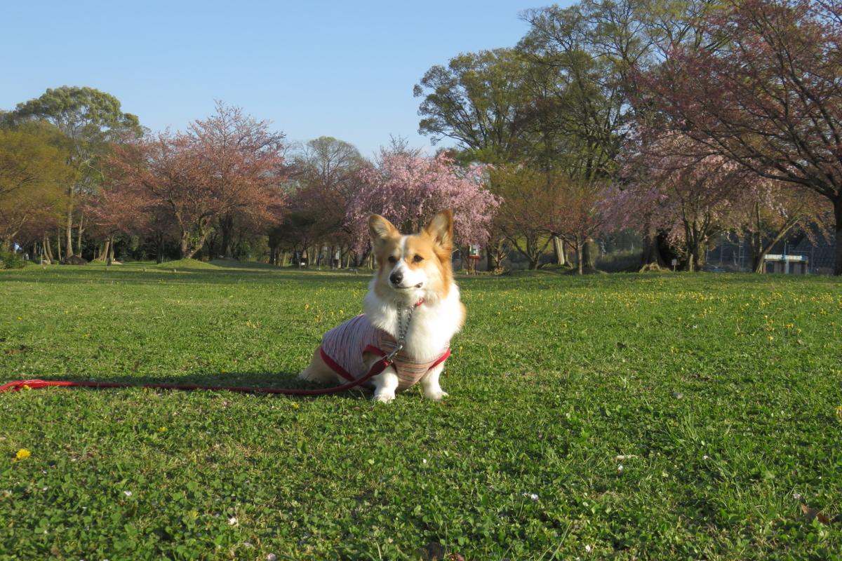 葉桜公園6