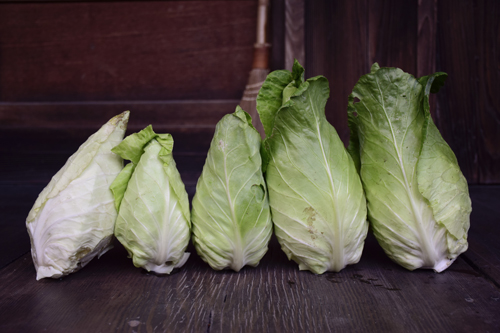 arrow_head_cabbage.jpg