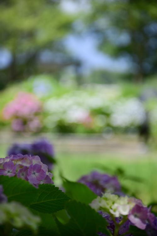 ashikarien_16_6_14_1.jpg