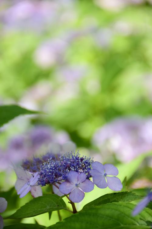 ashikarien_16_6_14_10.jpg