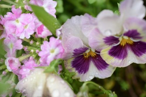 flower_16_5_7_1.jpg