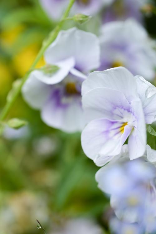 flower_16_5_7_4.jpg
