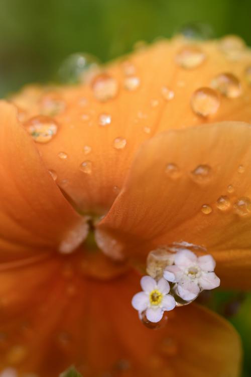 flower_16_5_7_5.jpg
