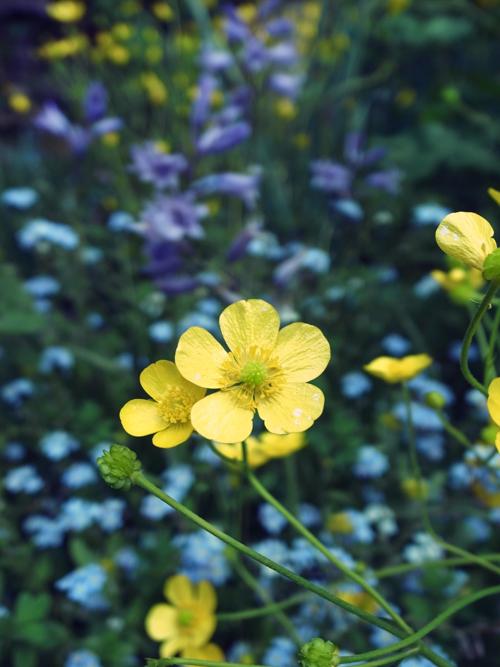 flowers_16_4_25_1.jpg