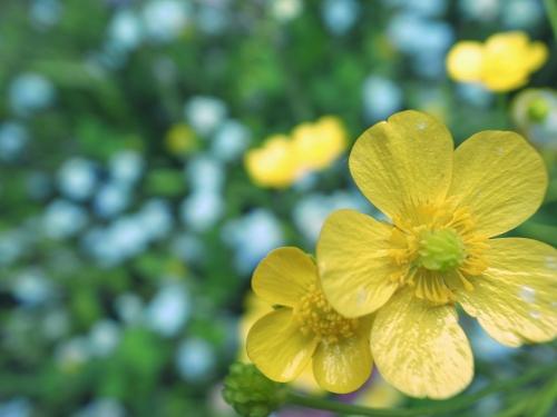 flowers_16_4_25_2.jpg