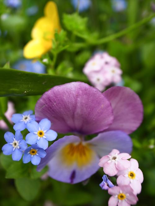 flowers_16_4_25_3.jpg