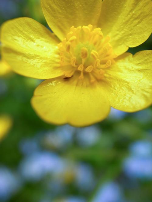 flowers_16_4_25_4.jpg