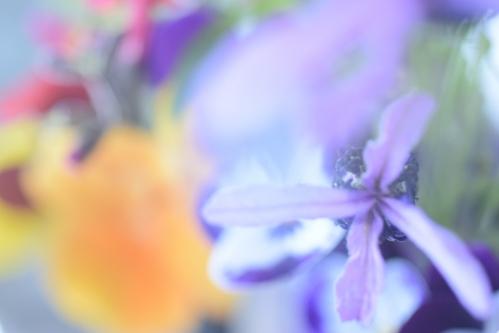 flowers_16_5_8_10.jpg