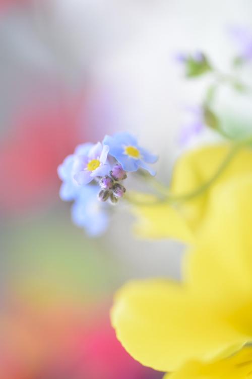 flowers_16_5_8_3.jpg