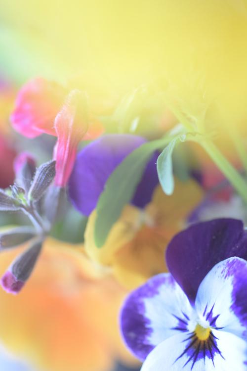 flowers_16_5_8_4.jpg
