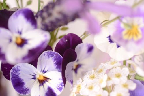 flowers_16_5_8_5.jpg