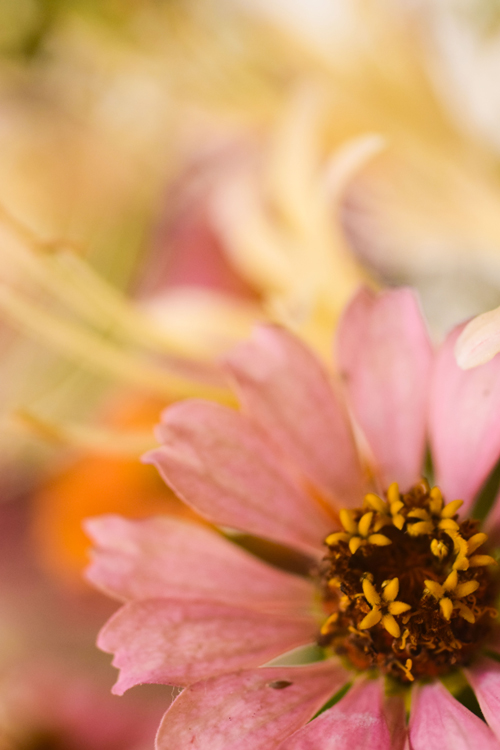flowers_16_9_30_2.jpg