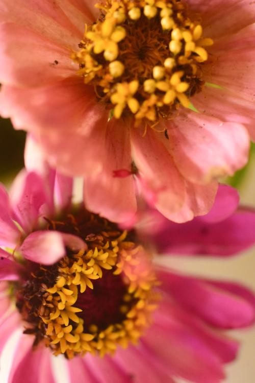 flowers_16_9_30_4.jpg