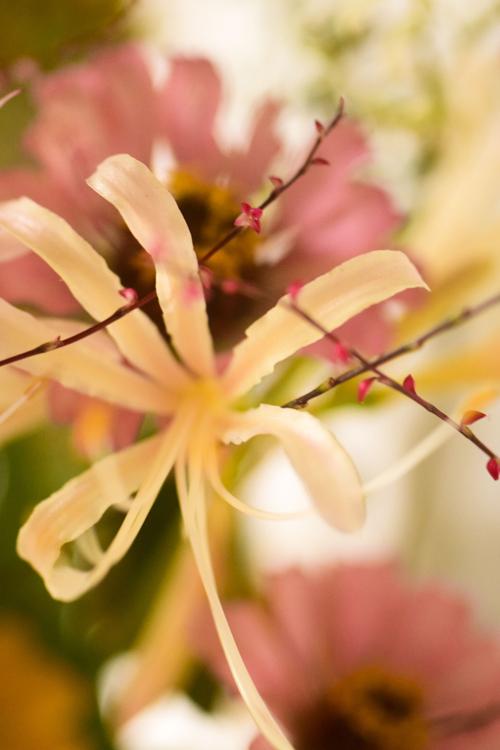 flowers_16_9_30_5.jpg