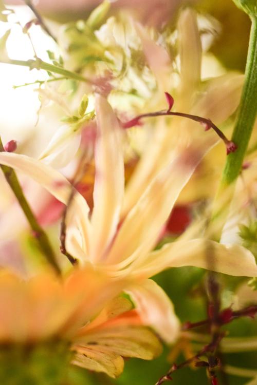 flowers_16_9_30_6.jpg