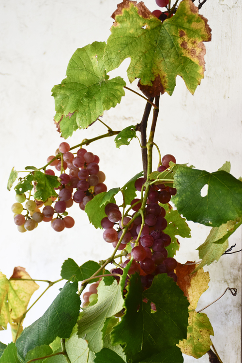 grape_juice_2.jpg