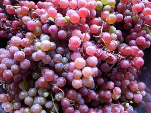 grape_juice_5.jpg