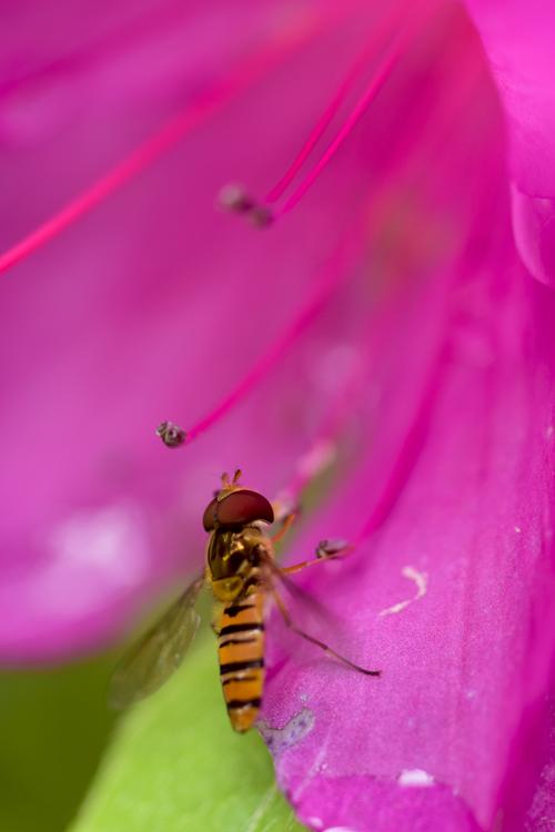 horsefly16_5_7_1.jpg