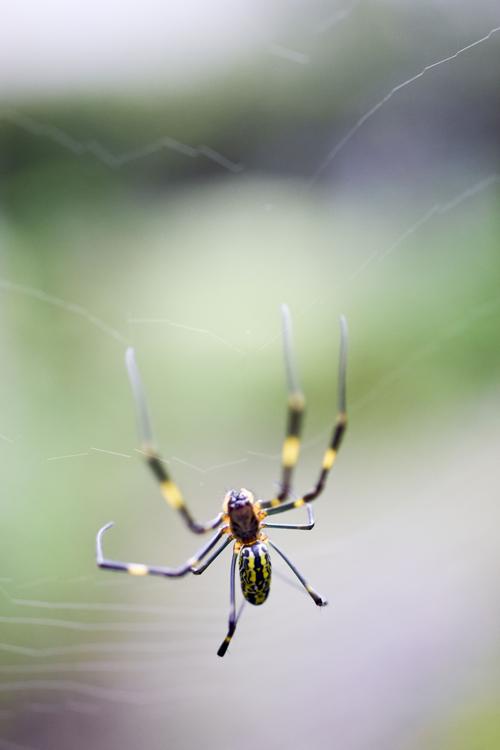 spider_16_9_19.jpg
