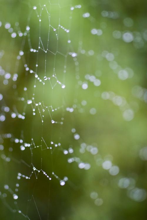 spider_16_9_28.jpg