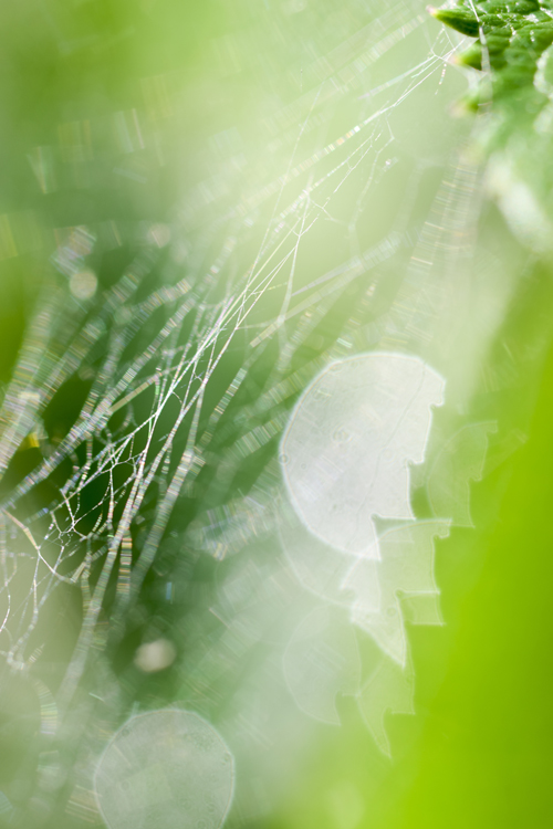 spiders_web_16_6_10_1.jpg