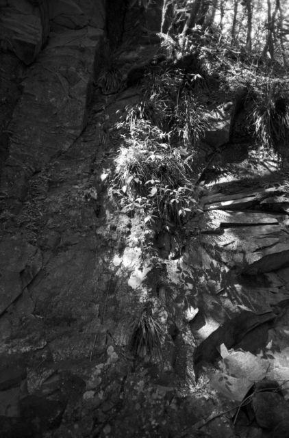 深山幽谷103b