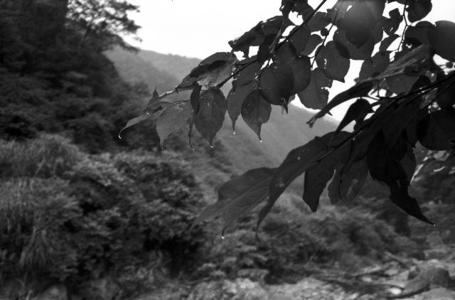深山幽谷126a