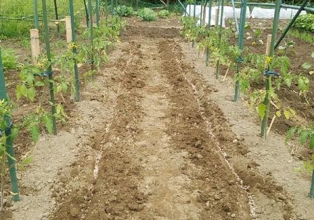 トマト定植後 追肥