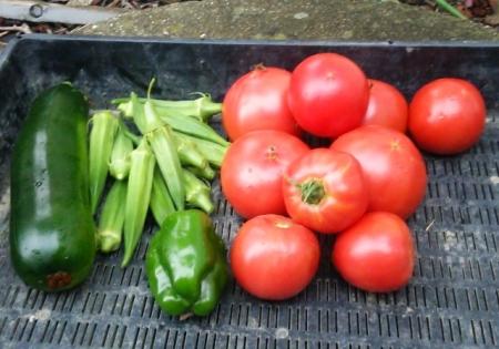 7月26日の収穫