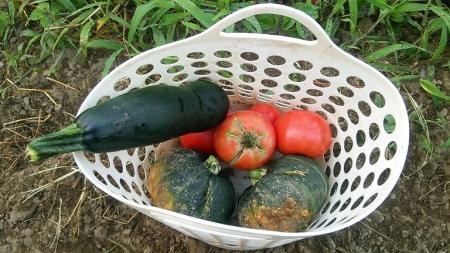 8月1日の収穫