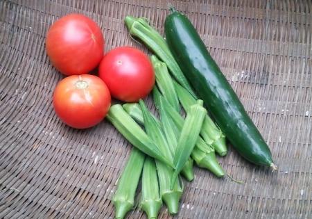 8月2日の収穫
