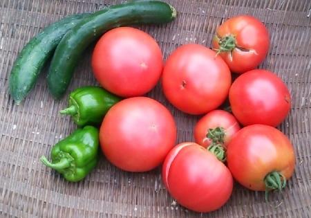 8月03日の収穫