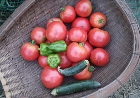 8月10日の収穫