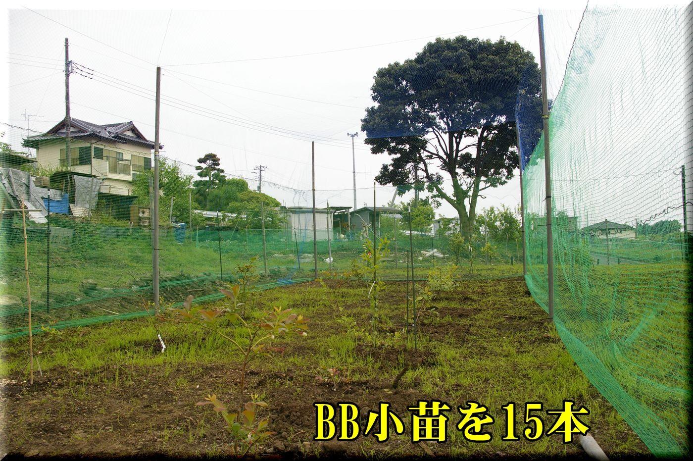 1BBnet160502_004.jpg