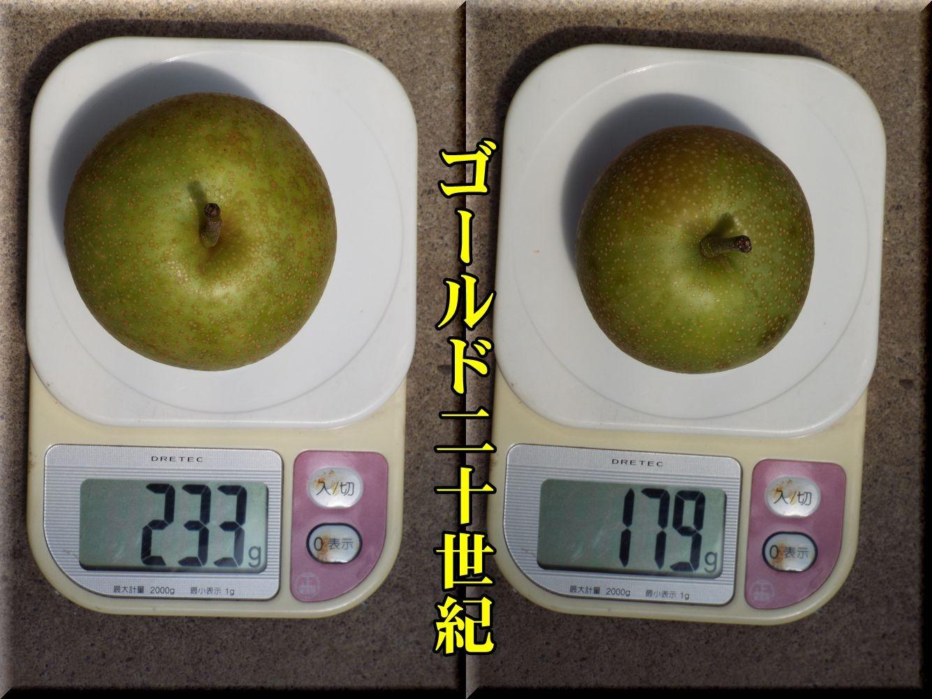 1G20seiki160825_033.jpg